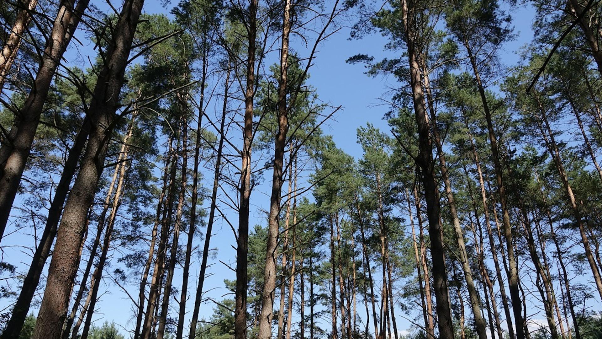 Blick auf die Baumkronen